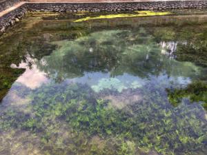 BaliSacredSpringboilingwaterssmall