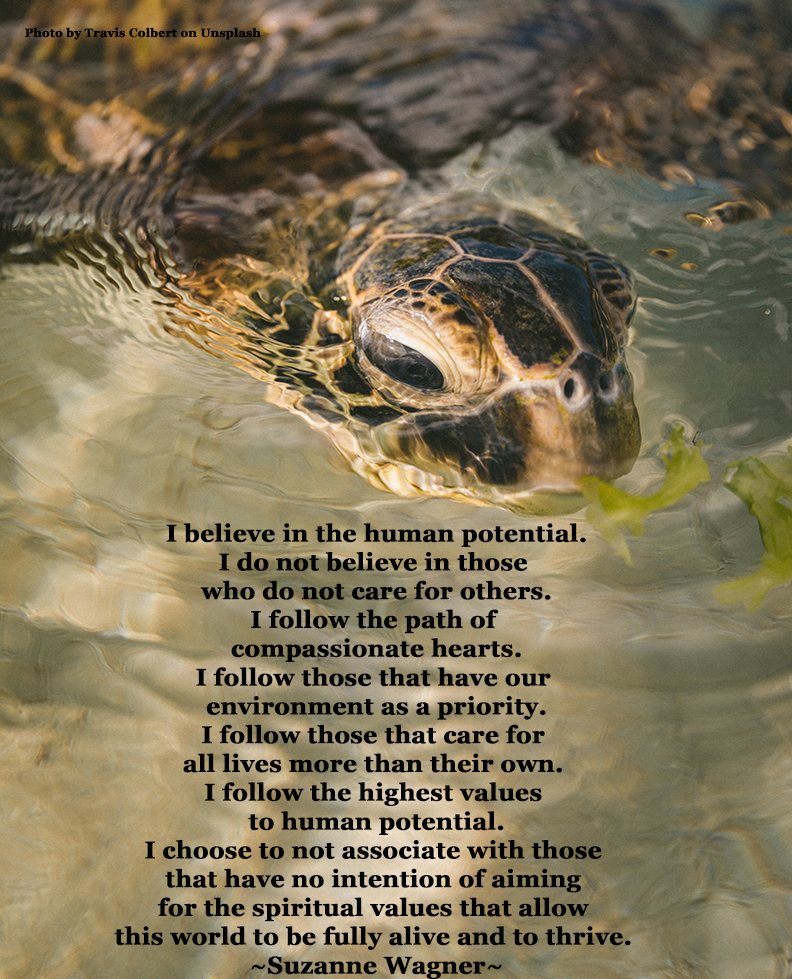 turtleinwaterquotesw