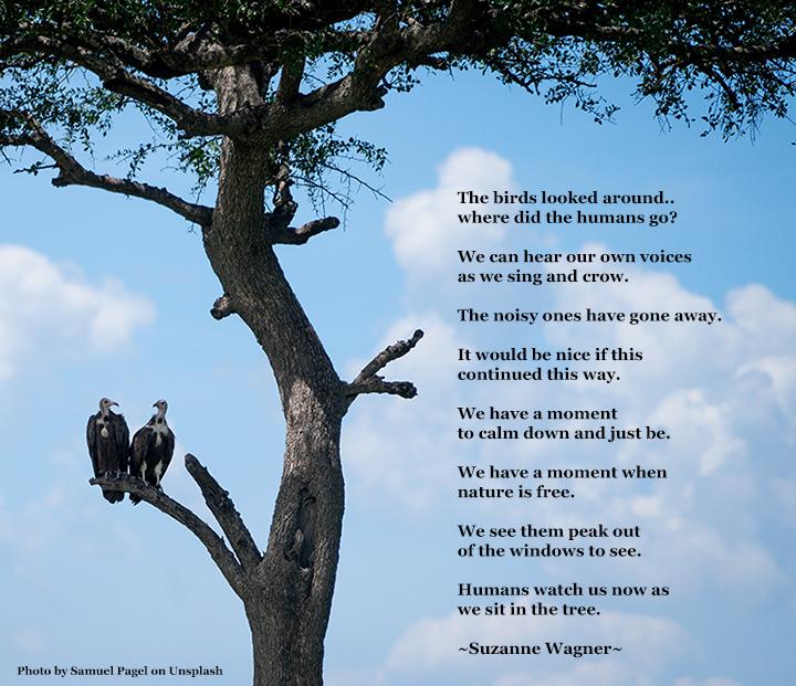 birds in a treequotesw