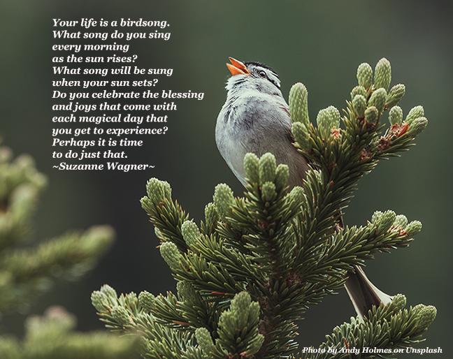 birdsongquotesw