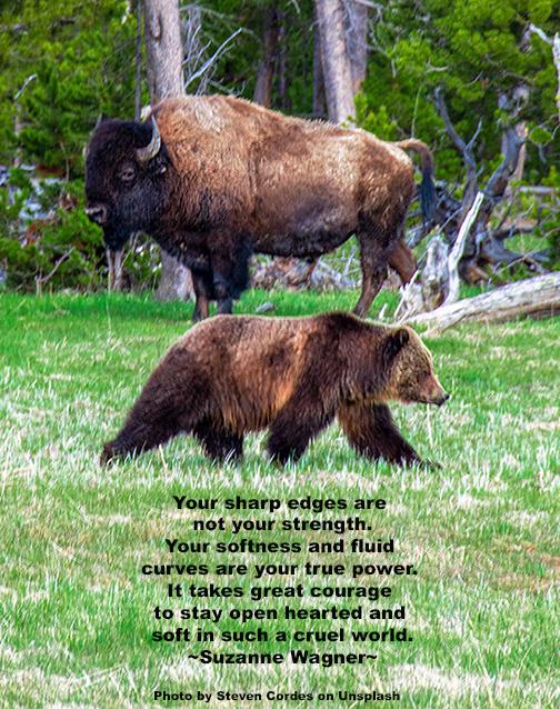 BuffaloandGrizleyquotesw